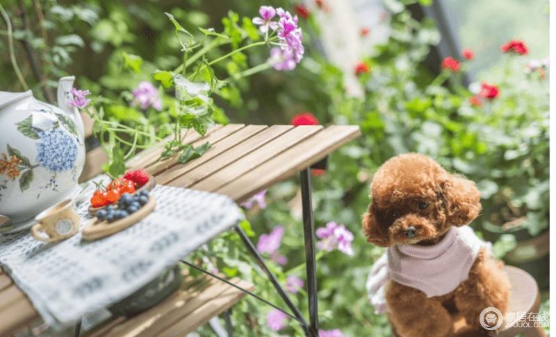 既然是屋主家的植物园,阳台一定是绿叶红花丛生的地方,既有休憩的桌椅,也有闲适的下午茶。
